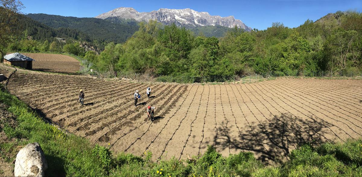 Η σπορά πραγματοποιήθηκε φέτος στο διευρυμένο μας αγρόκτημα!